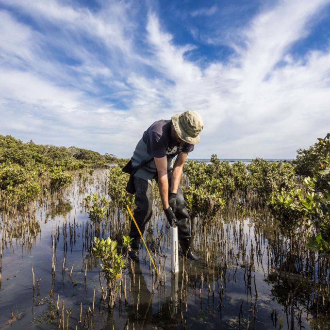 Environment - Man taking samples in swamp blue sky