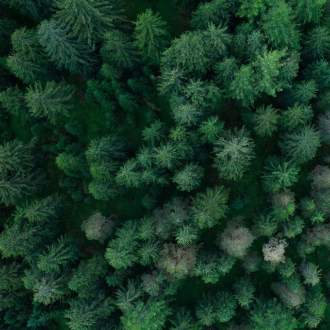 Capture de CO2 - Forêt de pins