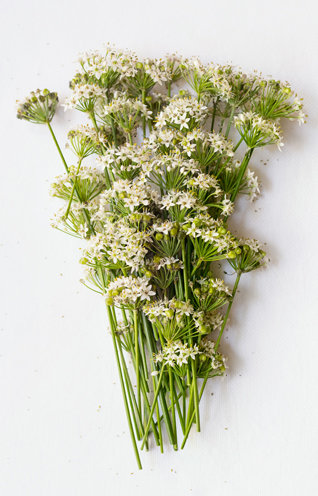 Fleurs Produit Philosophie Respect Signe Toque