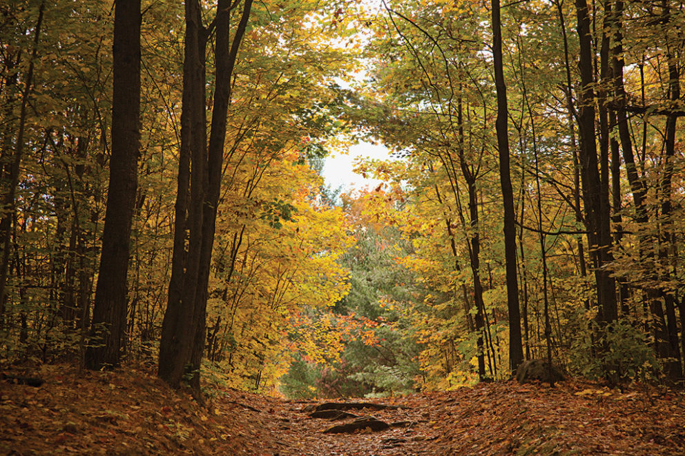 Lauriault Trail at the Mackenzie King Estate in Gatineau Park.
