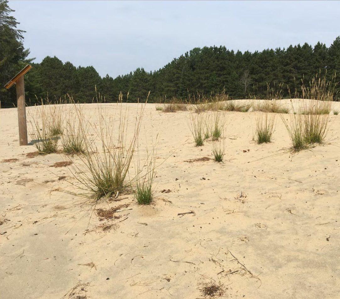 Pinhey Sand Dunes
