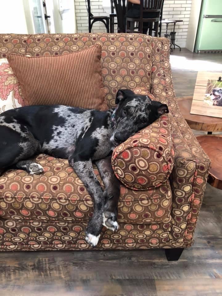 Rayne on sofa