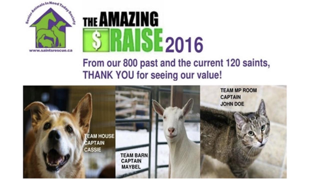 2016 the amazing raise