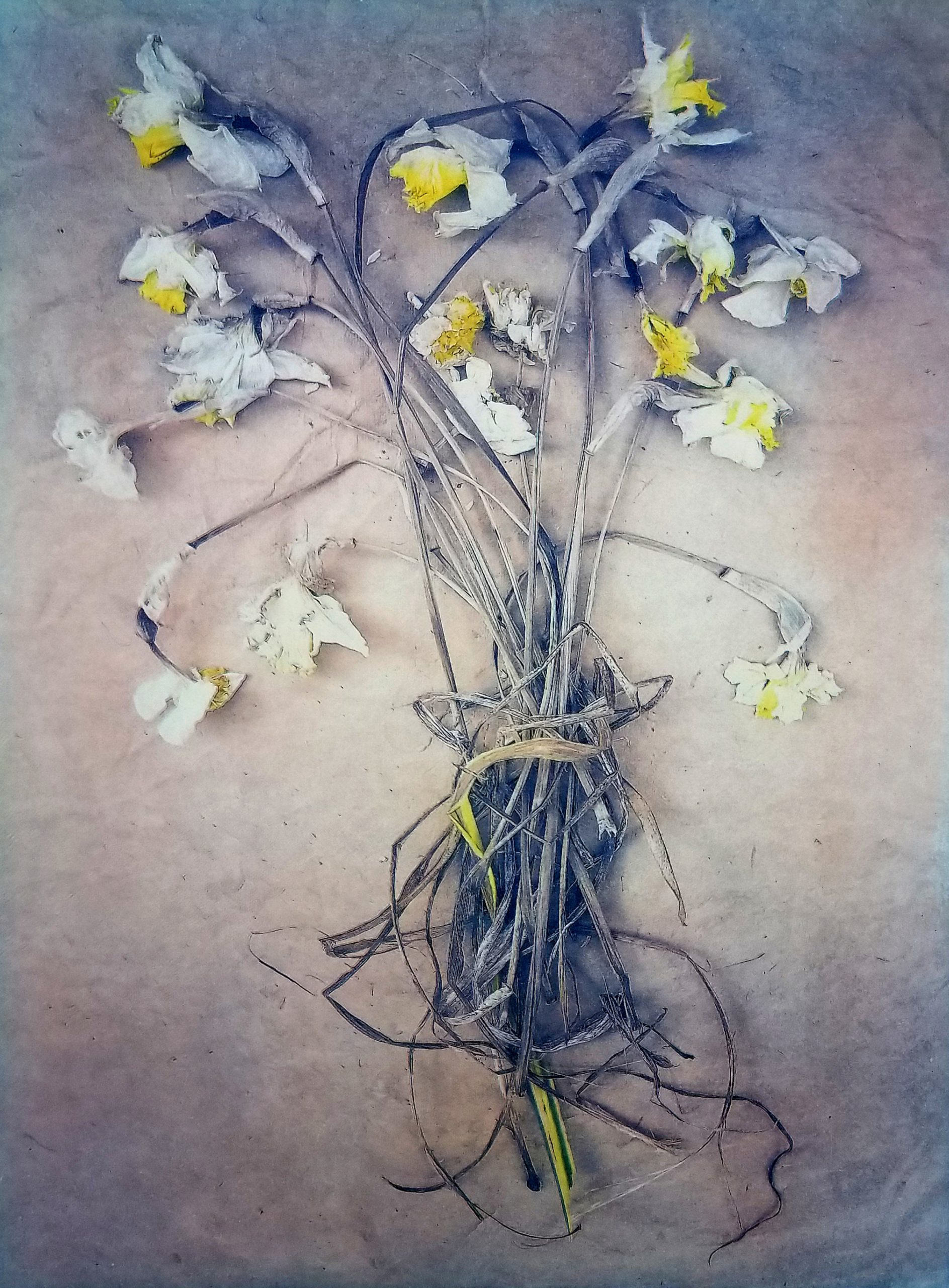 Diana H. Bloomfield, Daffodils, 2019. Courtesy of the artist.
