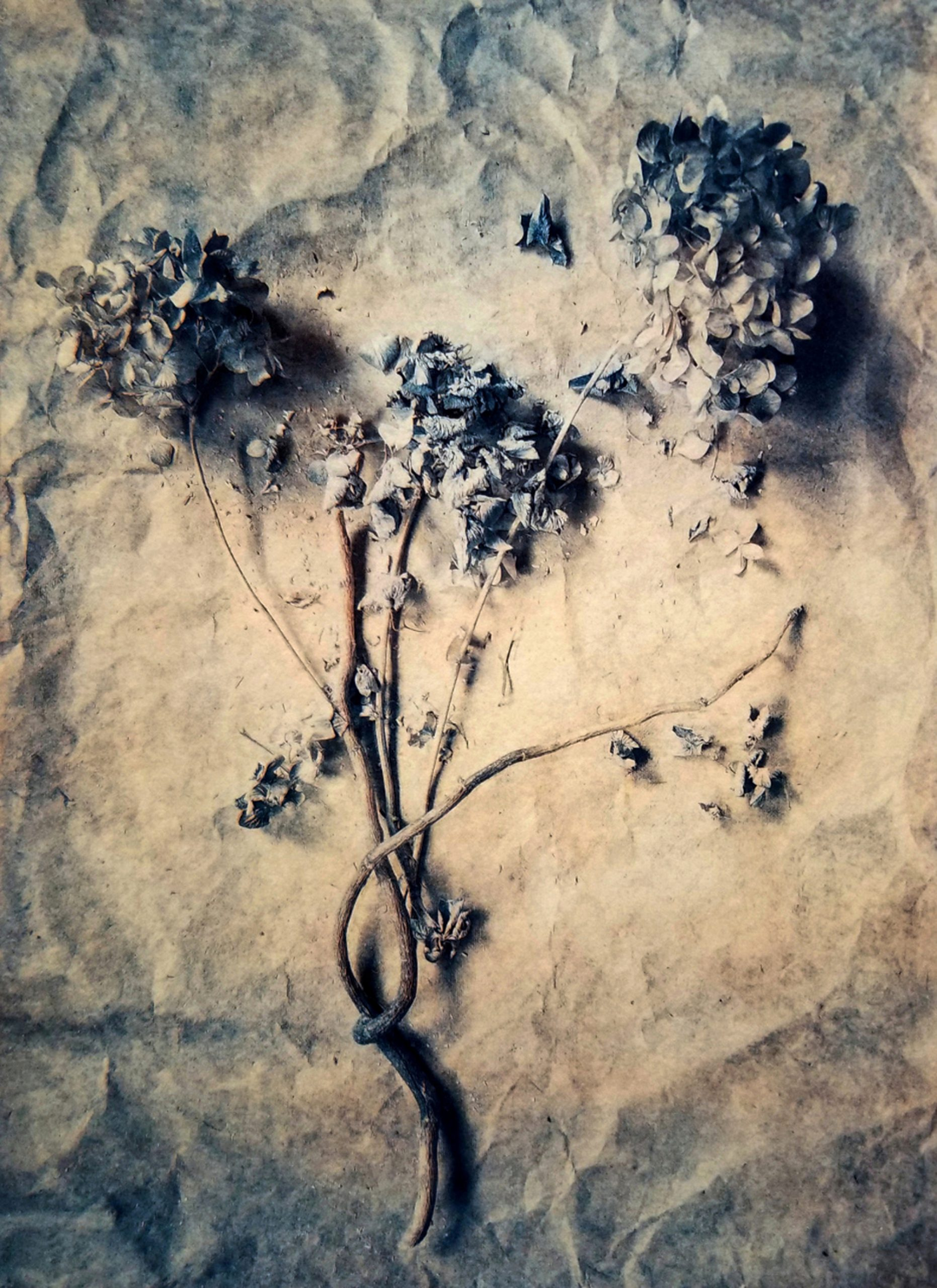 Diana H. Bloomfield, Hydrangea, 2018. Courtesy of the artist.