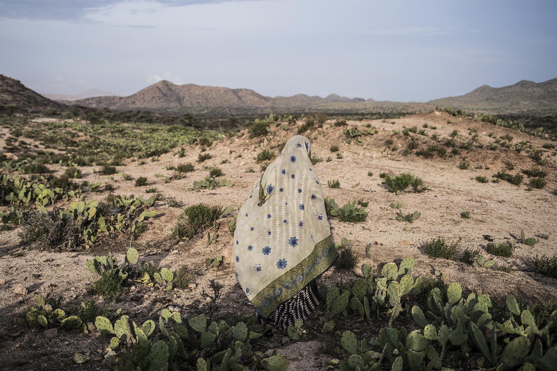 "Nichole Sobecki, Field of Cacti, April 2016. Archival pigment print, 24 × 36""."