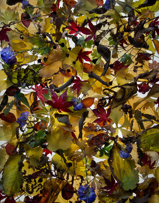 "Barbara Brown, Gather #4, 2017, Pigment on Cotton Rag, 45x36"""