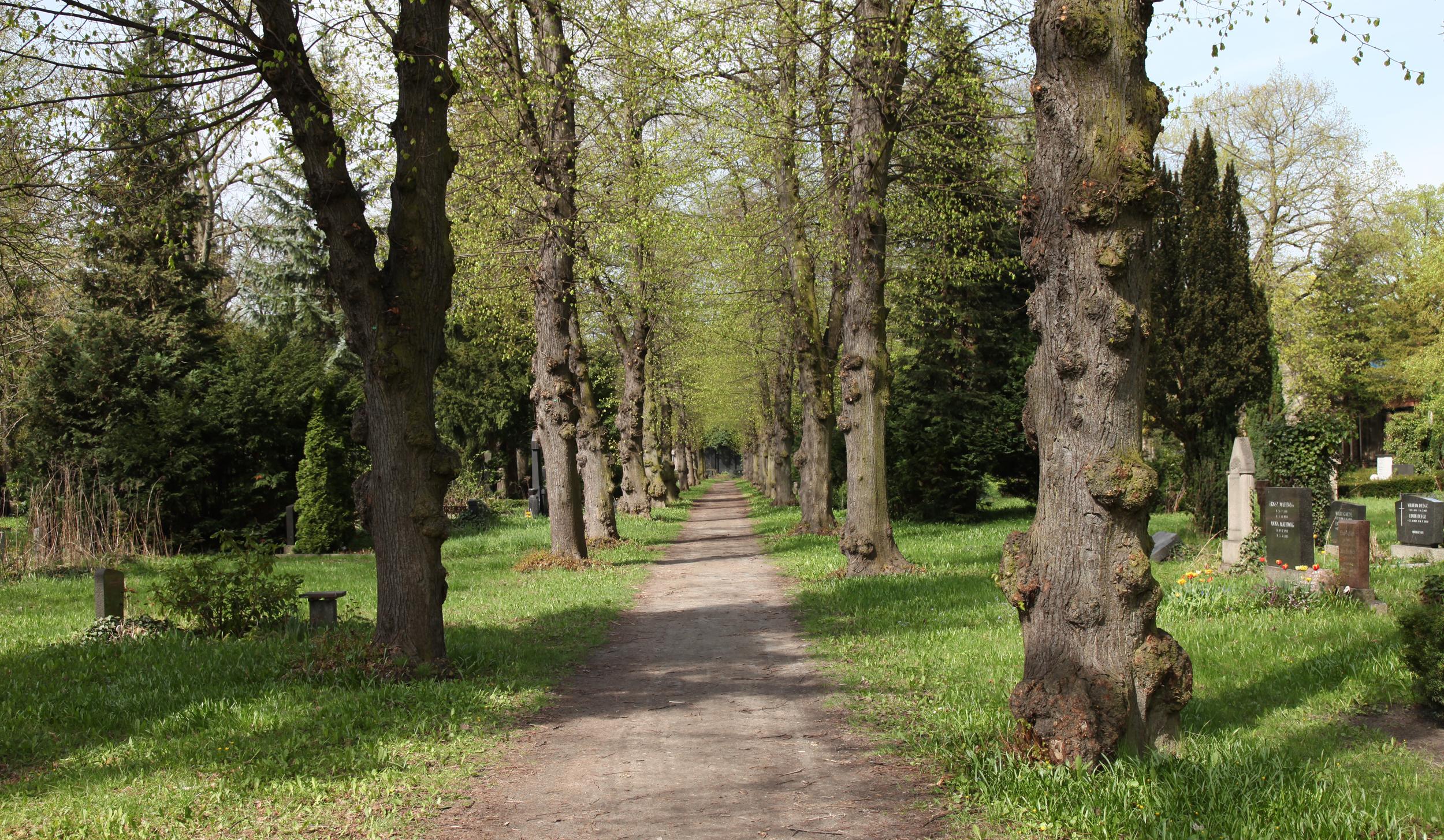 "Dan Hudson, Cemetery Path (4 seasons), 2016, Looping HD video, 22x34""."