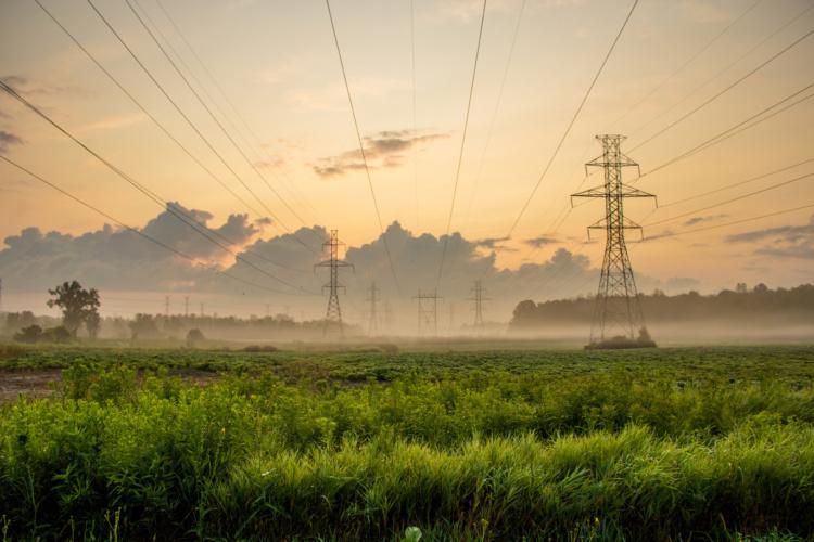 Nila Sivatheesan, Electric Sunrise, 2014