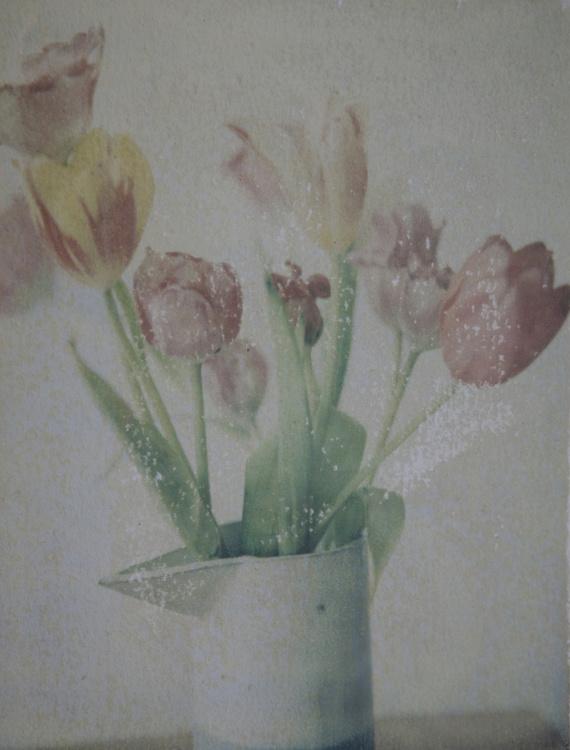 Phillipa C., Tulips, 2015