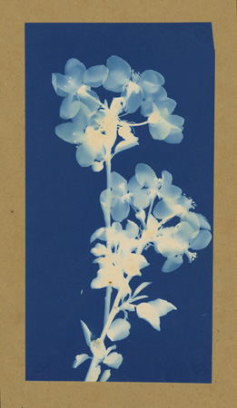 Bertha Jacques (American), Plant Study, c1910 Courtesy of Archive of Modern Conflict, London