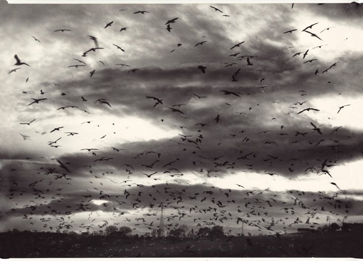 Mario Giacomelli (Italian), Migrating birds in flight, c1980 Courtesy of Archive of Modern Conflict, London