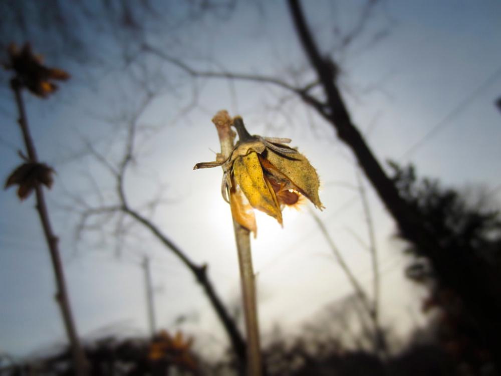 Avita (PCI Student), A Lifeless Flower, 2013