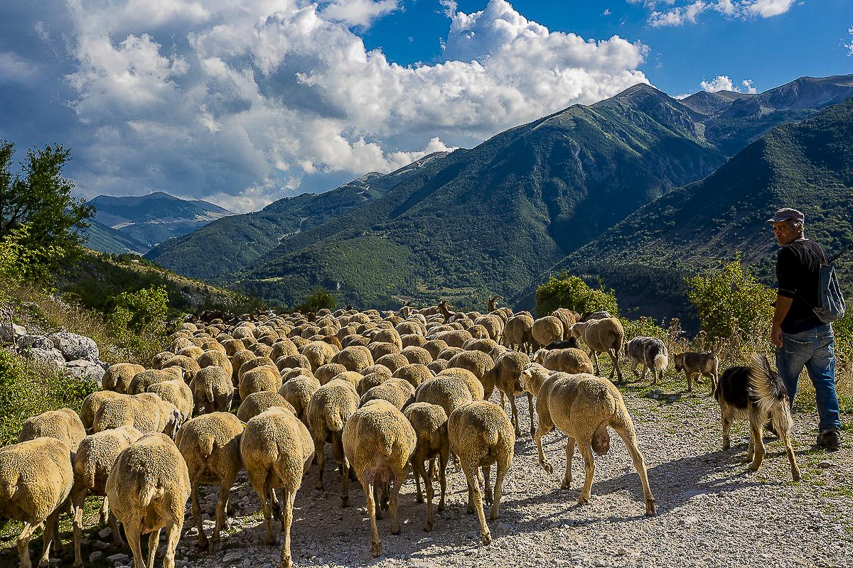 Cindi Emond, Moving the Flock Through Frattura Vecchia, 2020