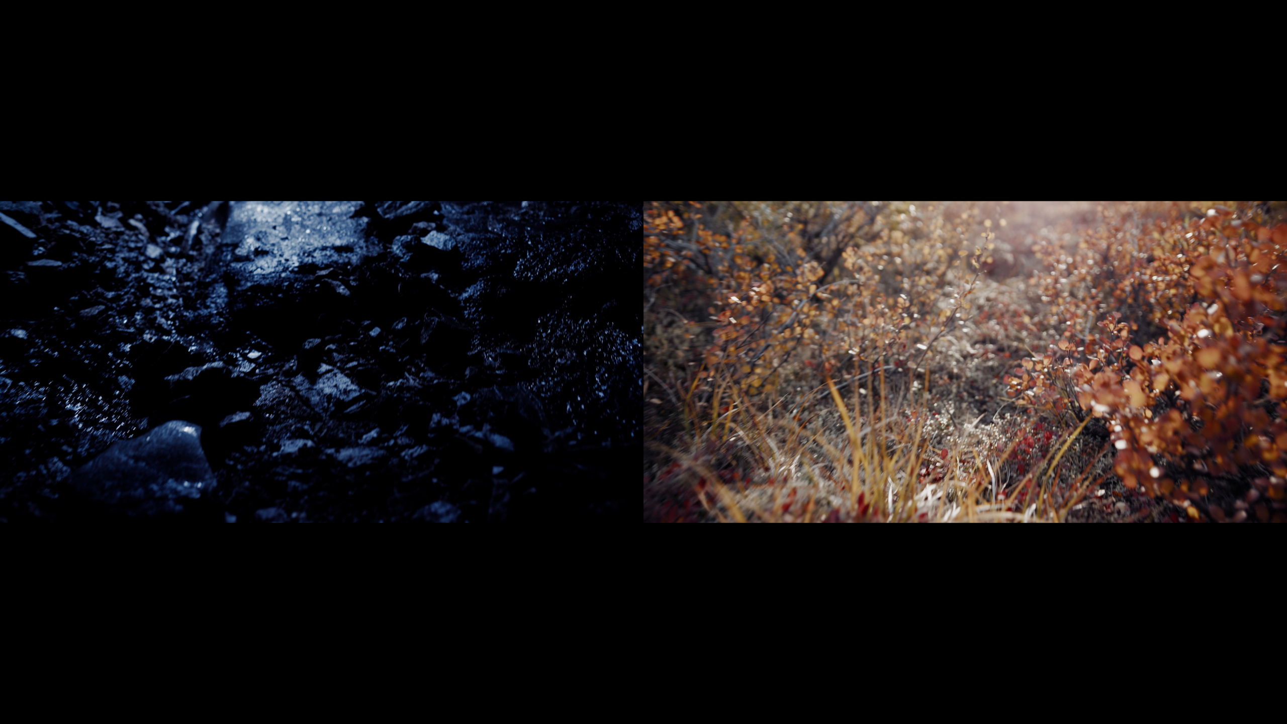 Rachel Rozanski and Parham Banafsheh, Perma, 2020, video still