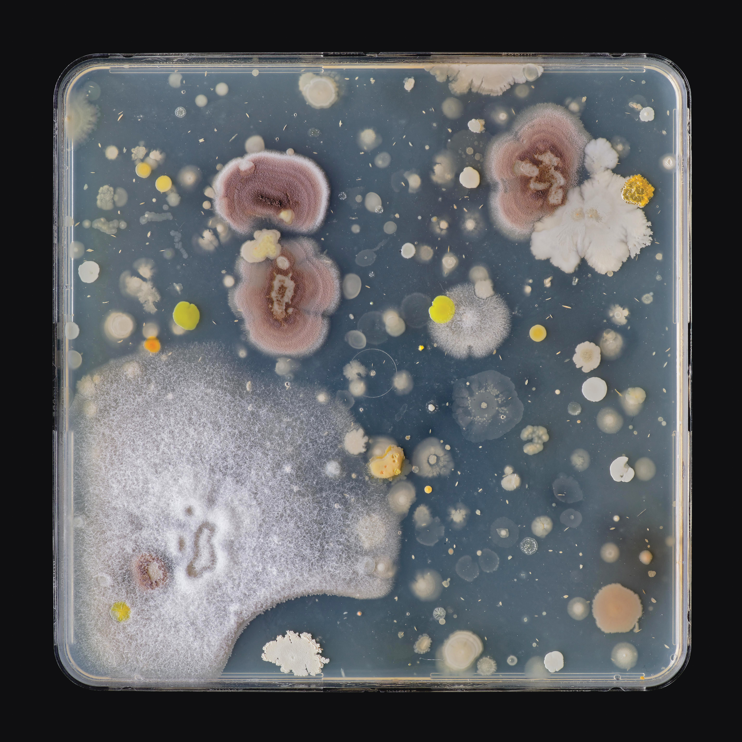 Jon Sasaki, Microbes Swabbed From A Palette Used By Frederick Varley, 2020. Courtesy of the artist and Clint Roenisch Gallery