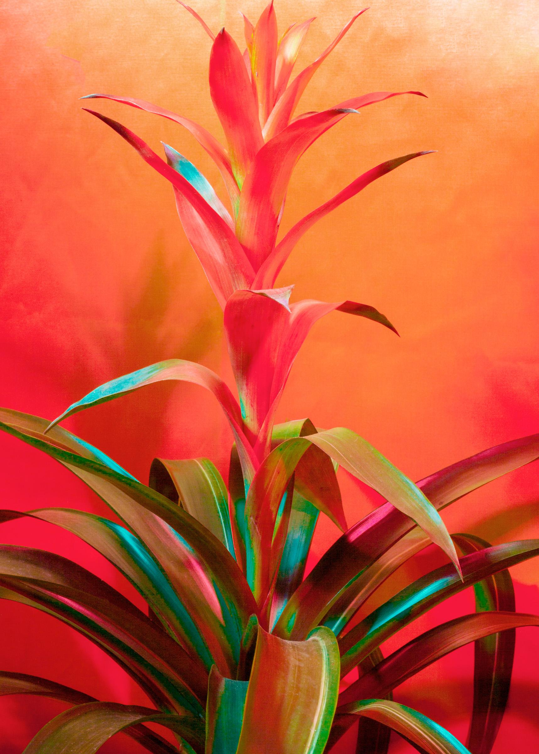 Dainesha Nugent-Palache, Untitled (Bromeliads), 2020. Courtesy of the artist