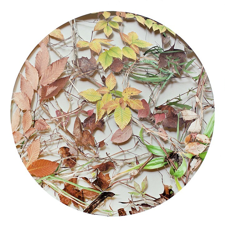 """Becky Comber, October (from the 12 Seasons series), 2021, hand cut photographic print, 22"""" x 22"""""""