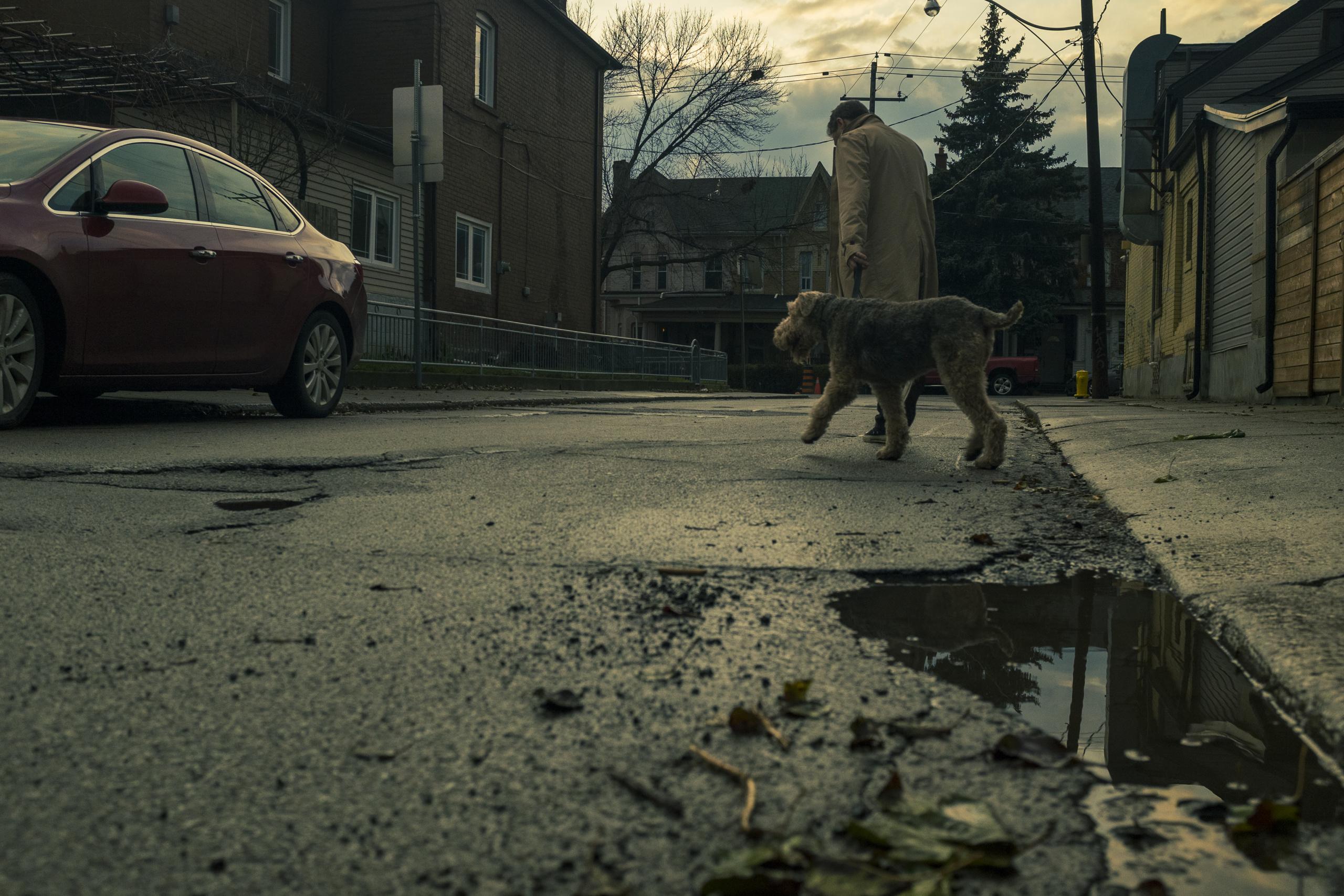 Helen Spitzer, Dog Man (Dovercourt), 2020
