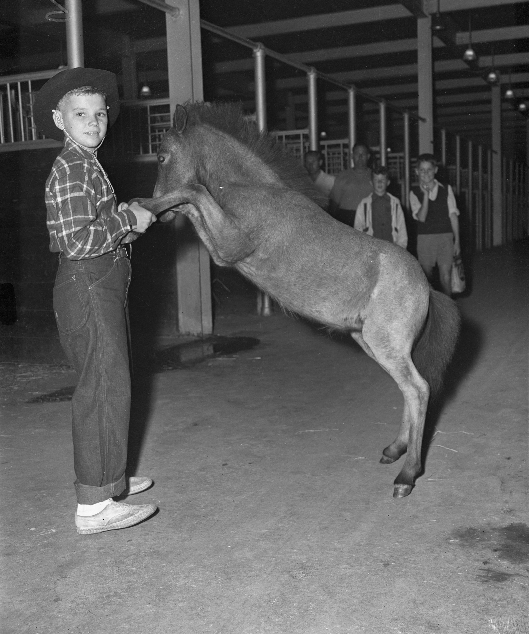 Agriculture-Horses, [190-] – [197-]. Canadian National Exhibition Archives, C1-S2-F6-I11. Courtesy of the CNEA