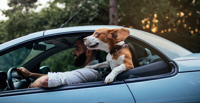 Tips for travelling with your pets
